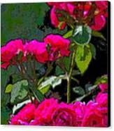 Rose 135 Canvas Print by Pamela Cooper