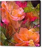 Rose 146 Canvas Print by Pamela Cooper