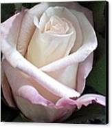 Rose Canvas Print by Chris Anderson