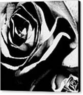 Roses Study 1 Canvas Print by Lisa  Spencer