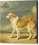 Rough-coated Collie Canvas Print by James Ward