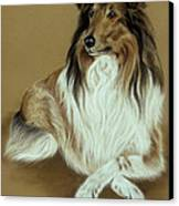 Rough Collie Canvas Print by Patricia Ivy