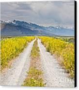 Ruby Mountains Wildflower Road Canvas Print by Sheri Van Wert