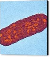 Salmonella Bacterium, Tem Canvas Print by Dr Klaus Boller
