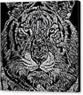 Samson Canvas Print by Jim Ross