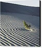 Sand Dunes, Death Valley, California Canvas Print by Marc Moritsch