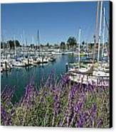 Santa Cruz Harbor - California Canvas Print by Brendan Reals