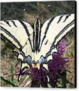 Scarce Swallowtail Canvas Print by Eric Kempson
