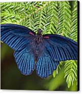 Scarlet Swallowtail Canvas Print by Joann Vitali