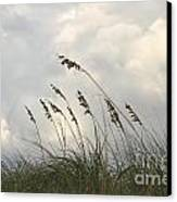 Sea Oats Canvas Print by Blink Images