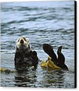 Sea Otter Enhydra Lutris Wrapped Canvas Print by Konrad Wothe