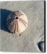Sea Urchin And Shell Canvas Print by Kenneth Albin