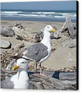 Seagull Bird Art Prints Coastal Beach Bandon Canvas Print by Baslee Troutman
