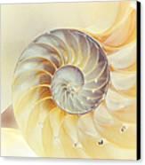 Seashell. Light Version Canvas Print by Jenny Rainbow