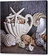Seashells Canvas Print by Tom Mc Nemar