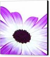 Senetti Magenta Bi-colour Canvas Print by Richard Thomas