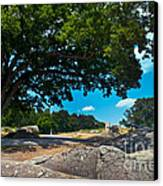 Shady Hilltop Canvas Print by Paul W Faust -  Impressions of Light