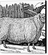 Sheep, 1788 Canvas Print by Granger