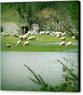 Sheep Grazing Amidst Flood Canvas Print by Cindy Wright