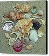 Shell Collection 2 Canvas Print by Sandi OReilly