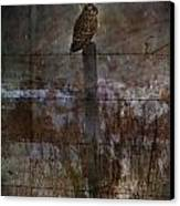 Short Eared Owl Canvas Print by Jerry Cordeiro