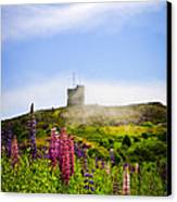 Signal Hill In St. John's Newfoundland Canvas Print by Elena Elisseeva