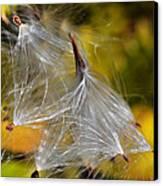 Silky Autumn Canvas Print by Susan Leggett