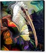 Sir Ibis Canvas Print by Doris Wood
