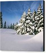 Snow Covered Trees In The Oregon Canvas Print by Natural Selection Craig Tuttle