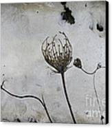 Snow Seeds Canvas Print by Paul Grand