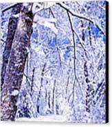Snowy Path Canvas Print by Rob Travis
