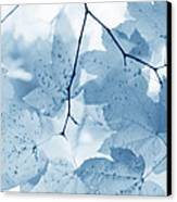 Softness Of Blue Leaves Canvas Print by Jennie Marie Schell