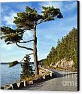 Somes Sound Maine Canvas Print by John Greim