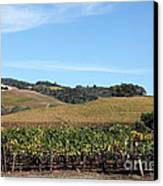 Sonoma Vineyards - Sonoma California - 5d19309 Canvas Print by Wingsdomain Art and Photography