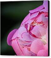 Sorbet Peony Canvas Print by Ruthie Lombardi