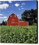 Soybean Field And Red Barn Near Anola Canvas Print by Dave Reede