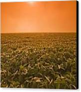 Soybean Field On A Misty Morning Canvas Print by Dave Reede
