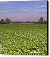 Soybean Field Canvas Print by Paolo Negri