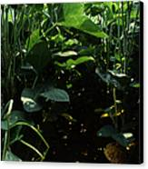 Soybean Leaves Canvas Print by Photo Researchers