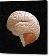 Space Brain Canvas Print by Richard Newstead