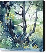 Spanish Olive Trees Canvas Print by Stephanie Aarons