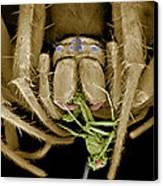 Spider Eating A Fly, Sem Canvas Print by Volker Steger