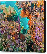Spotted Goldring Surgeonfish And Coral Canvas Print by Beverly Factor