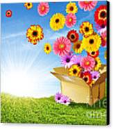 Spring Delivery Canvas Print by Carlos Caetano
