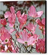 Spring Dogwood Tree Flowers Art Prints Pink Flowering Tree Canvas Print by Baslee Troutman
