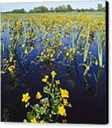 Spring Flood Plains With Wildflowers Canvas Print by Norbert Rosing