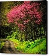 Spring Mountain Road Canvas Print by Michael L Kimble
