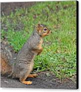 Squirrel Canvas Print by Linda Larson
