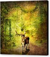 Stag Canvas Print by Svetlana Sewell