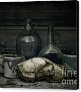Still Life With Bear Skull Canvas Print by Priska Wettstein